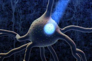 optogenetics, neuroscience