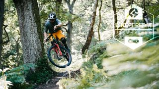 A mountain biker does a small jump on a trail lined with ferns