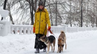 A woman walking her dogs in the snow