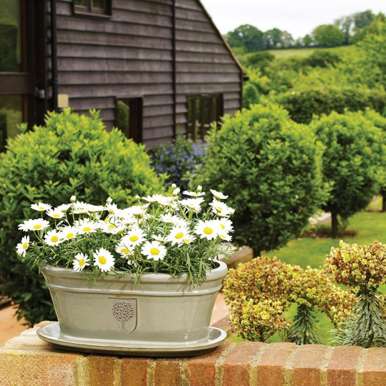 window boxes: RHS antique grey oval trough