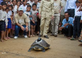 turtles, rare turtle released, southern river terrapins, rarest turtles on earth, rare reptiles, turtles in Cambodia, endangered species news, animals