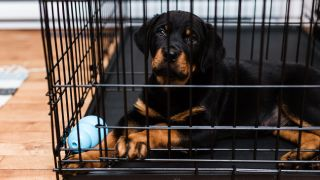 How to stop a puppy crying in crate