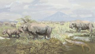 Dinodontosaurus communal latrine