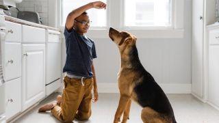 train a dog with treats