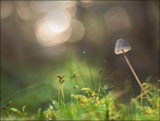a magic mushroom in nature.