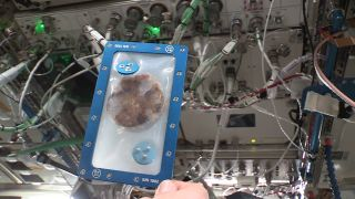 The second of five DoubleTree by Hilton chocolate chip cookies is seen after being baked using Zero G Kitchen and Nanoracks' Zero G Oven aboard the International Space Station.