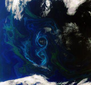 Algae Bloom Satelitte
