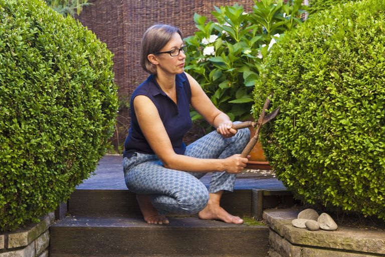 woman trimming a box tree in the garden