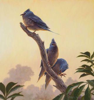 Ancient bird illustration