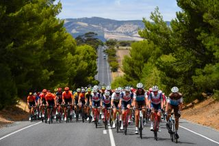The men's peloton on stage 6 of the 2020 Tour Down Under