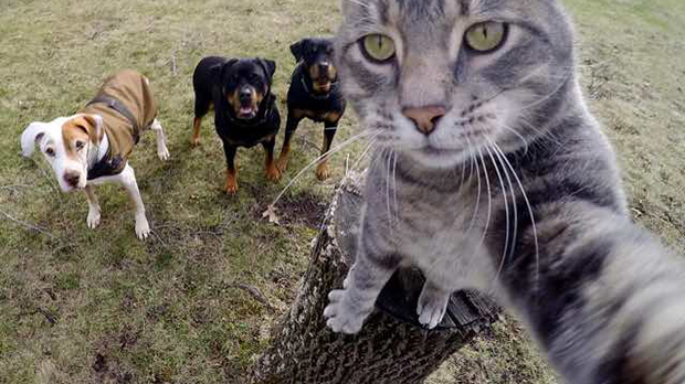 This cat takes better selfies than you | TechRadar