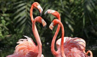 flamingos-pink-110131-02