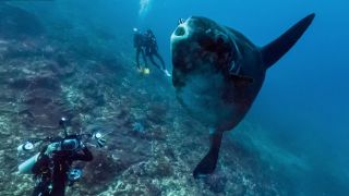 Google Street View dives below the waves for World Oceans Day