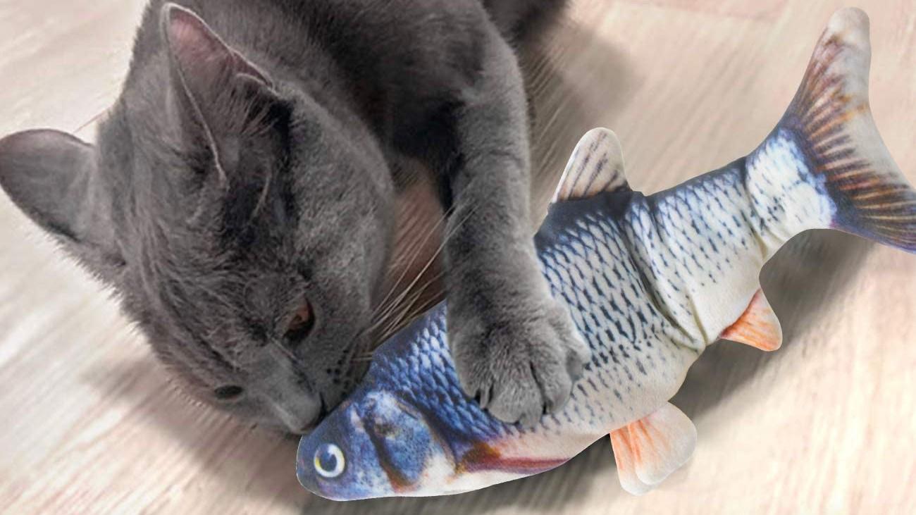 Meilleurs jouets pour chats