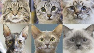 Cat characteristics: Images of six different cats