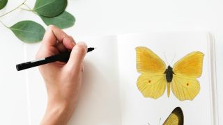 Hand drawing butterfly with pen
