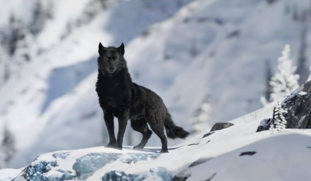Black wolf in Call of the Wild