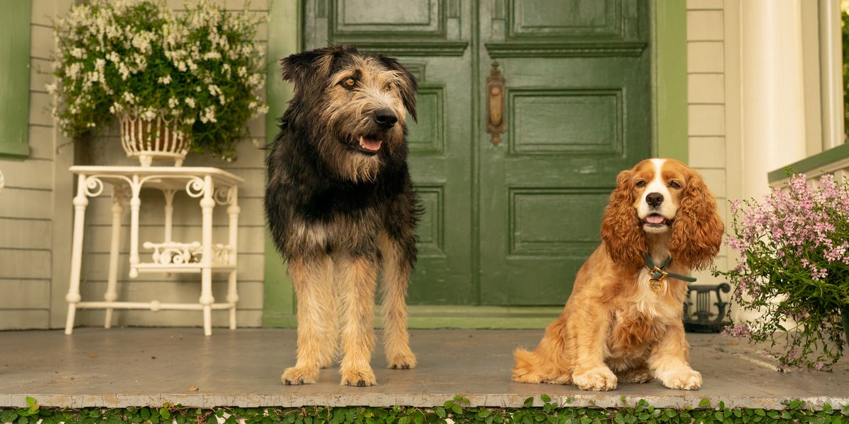 The two titular dogs from Lady and the Tramp on Disney+.