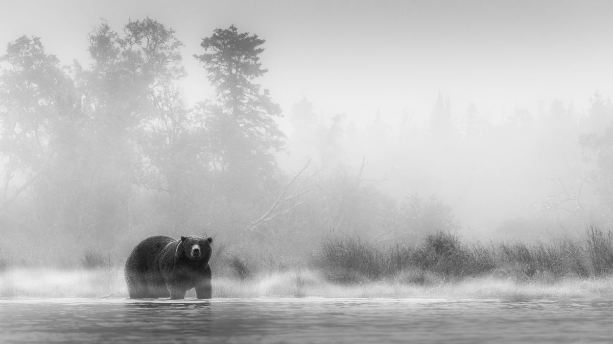 This stunning bear photography will inspire your wildlife shooting