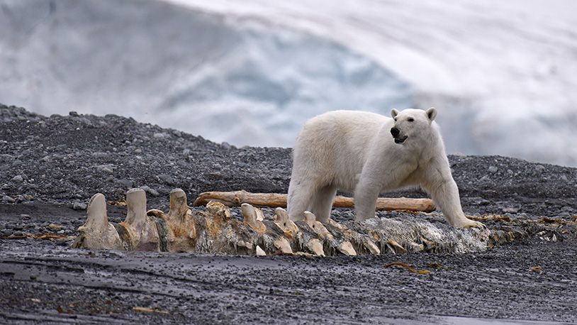 We go on an Arctic adventure with wildlife pro Rick Tomlinson