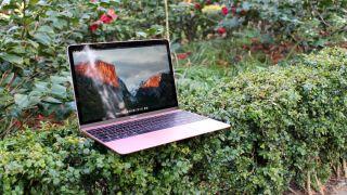Das MacBook (2016) 12-Zoll sitzt auf einem Busch