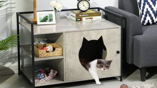 Ways to hide the litter box
