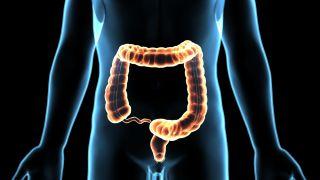 large intestine, colon