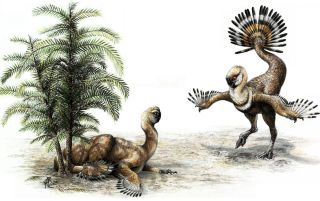 male oviraptor dinosaur shakes tail feathers to woo mate.