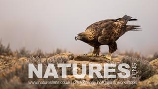 NaturesLens
