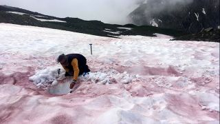 """A researcher samples snow covered with """"glacier blood."""""""