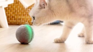 Automated cat toys