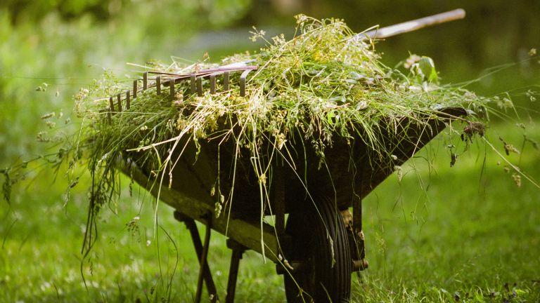 A wheelbarrow full of weeds