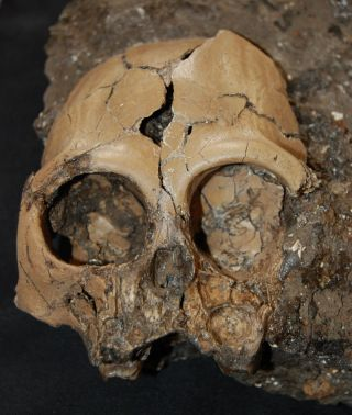 An extremely rare juvenile skull of an extinct ape that lived some 6 million years ago has now been revealed from China.
