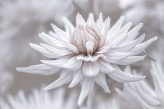 GuruShots: winning photographs from the Mostly White contest
