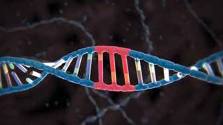 Developing Your Company's DNA