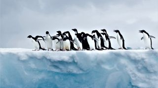 A group of penguins gather on the ice in Antarctica.
