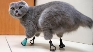 3D-printed titanium limbs helped a frostbitten feline get back on her feet.