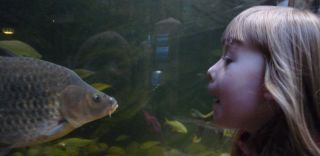 Fish and girl face to face, faces