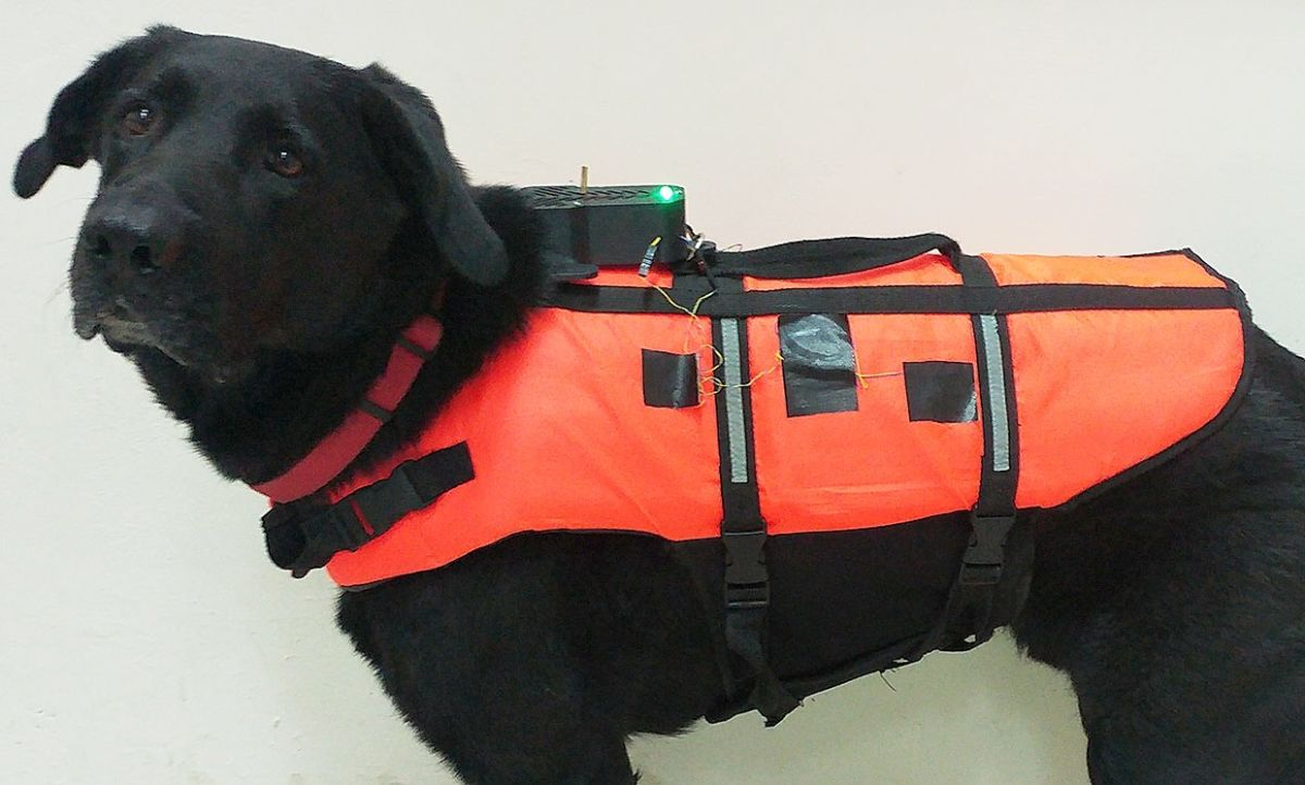 Scientists Invent Haptic Vest to Control Dogs Remotely