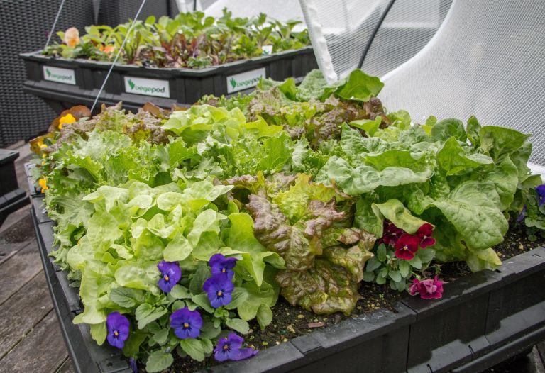 small vegetable garden ideas - planter from Vegepod