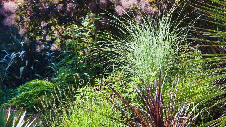 The Impatient Gardener 5 plants you should grow