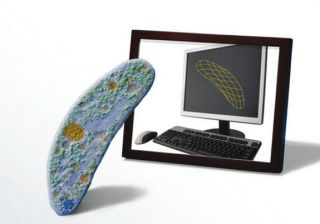 microbe and computer