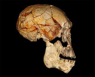 human ancestor fossils discovered in Kenya