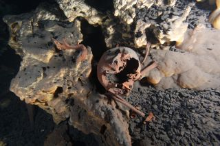 a skull found in a cave in Quintana Roo that dates to 10,000 years ago