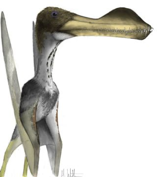 A toothy pterosaur, a small fossil revealed the biggest of toothy pterosaurs could get bigger than thought.