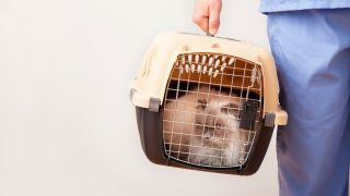 How to get a cat into a carrier: Cat in carrier being lifted by vet