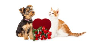 Dog and cat on white background with red heart and red roses