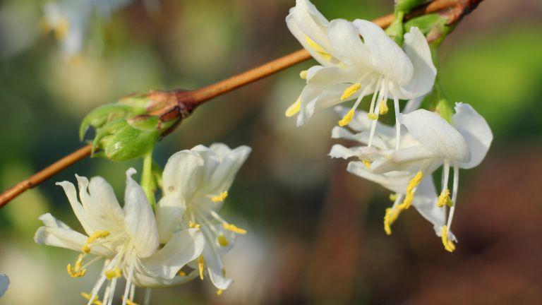 Fill your garden with scent