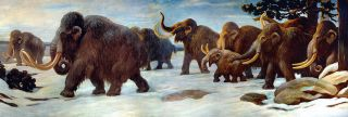 This mural at the American Museum of Natural History in New York City shows woolly mammoths near the Somme River.