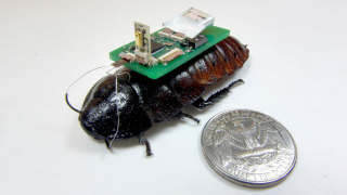 Cyborg cockroaches are being trained to sniff out earthquake survivors